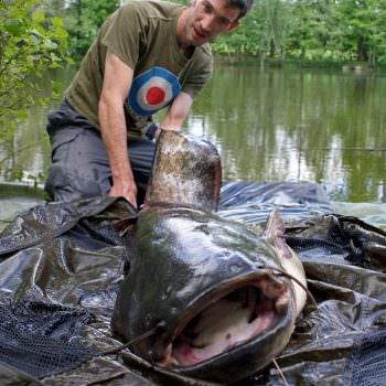 bow with a 74lb catfish in france