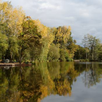 carp lake in france in autumn evening light