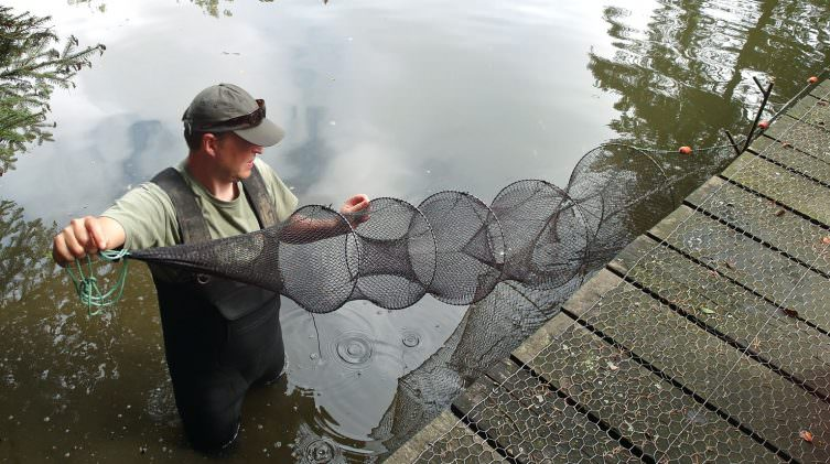 using-fyke-net-for-catching-baby-carp