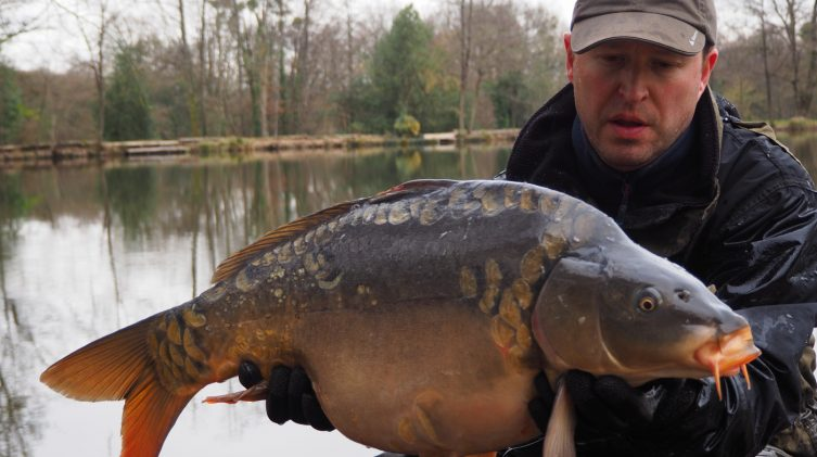 New mirror carp added to Beausoleil