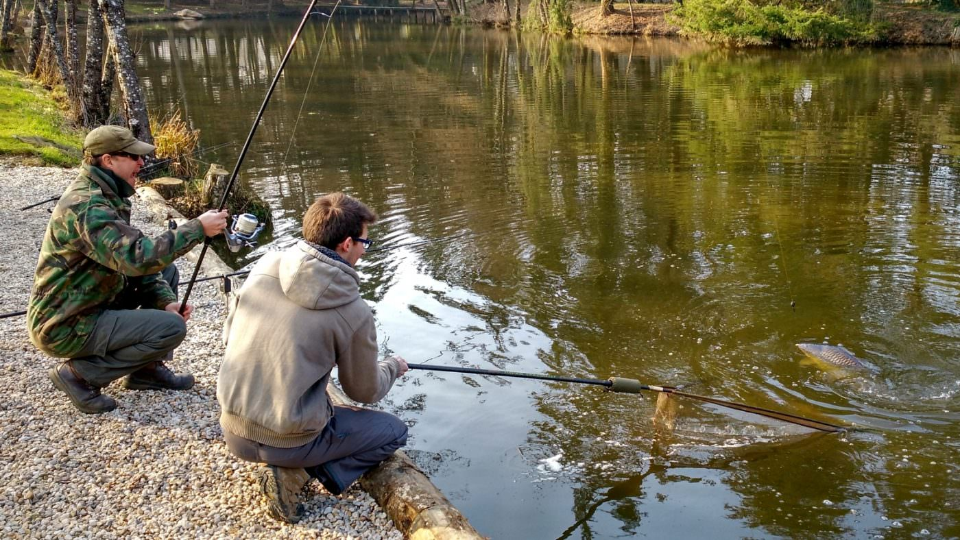 carp in the net with angler