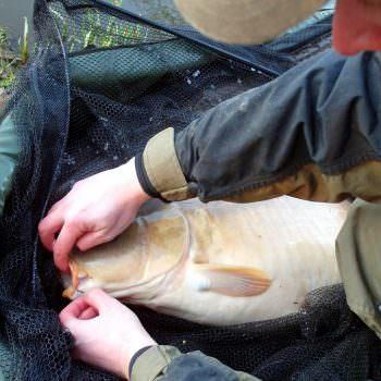 Angler unhooking a carp