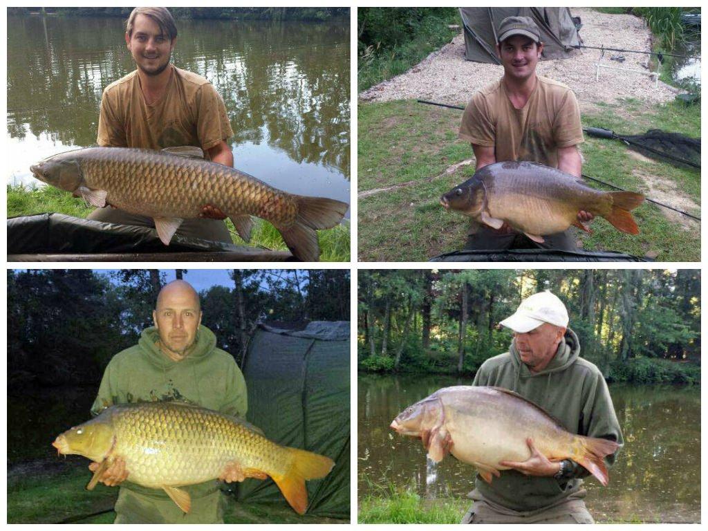Carp catches July 2014