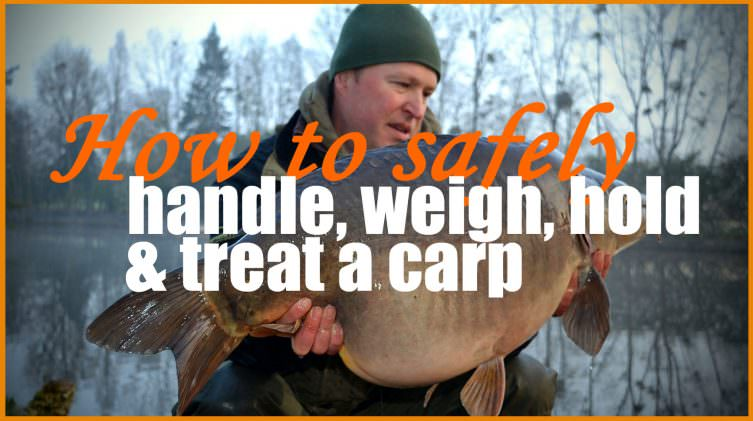 How-to-handle-and-treat-carp-carp-care video