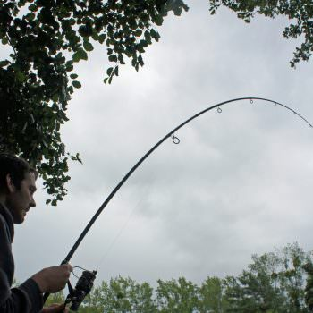 angler with carp hooked on rod