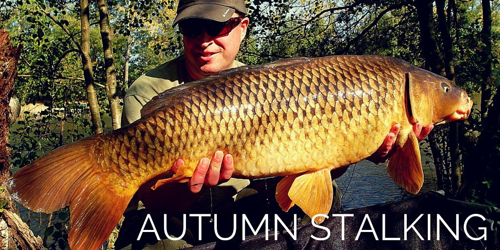 autumn stalking carp in the margins of the lake