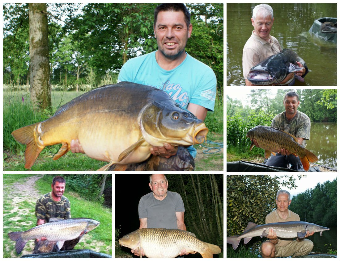 carp and catfish caught in june at small french lake