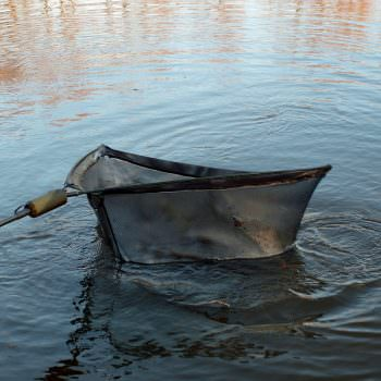 carp in the net