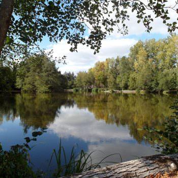 carp-lake-in-france-corner-view