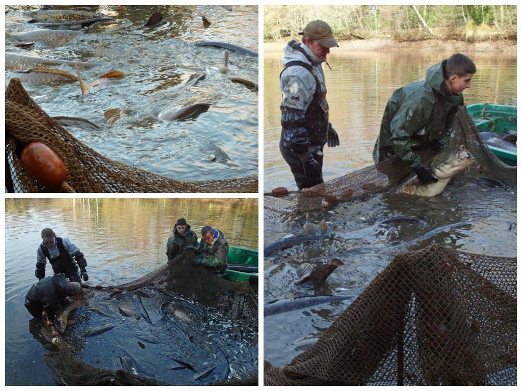carp-lake-winter-netting