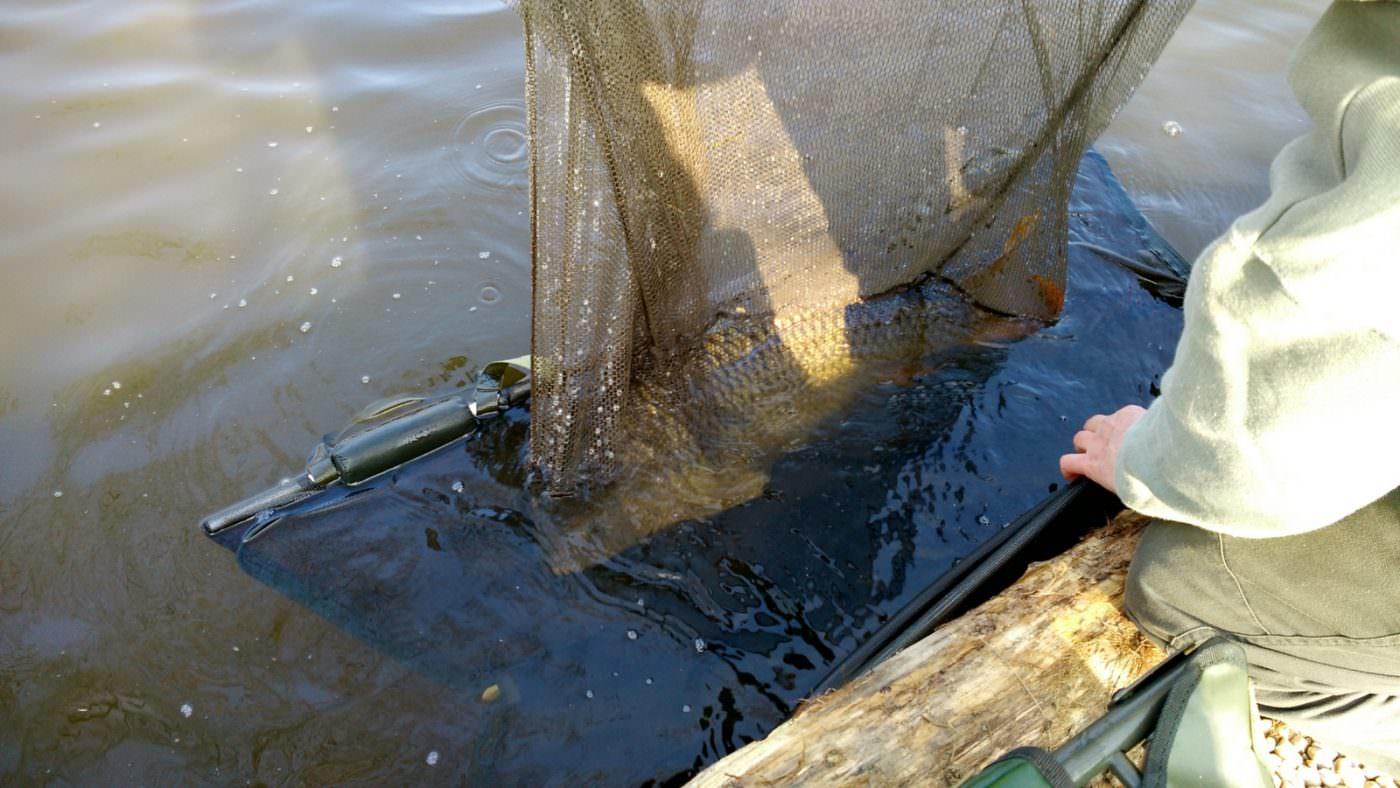 good carp care put the sling under net to lift the carp