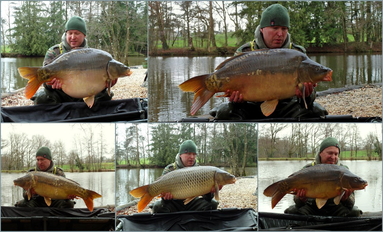 new carp added to the lake