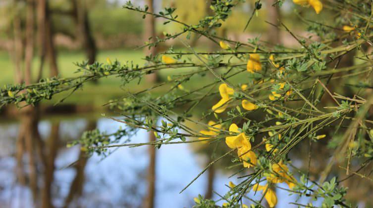 spring-in-bloom-at-Beausoleil