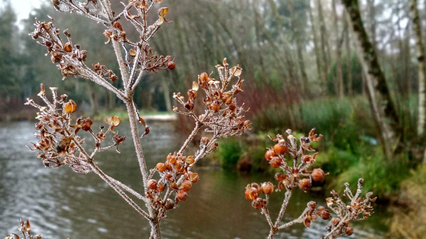 winter nature carp lake