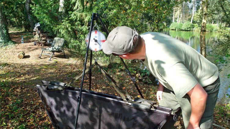 angler weighing a carp on the lake island