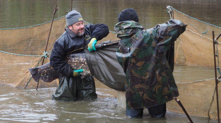 handling the catfish during the netting