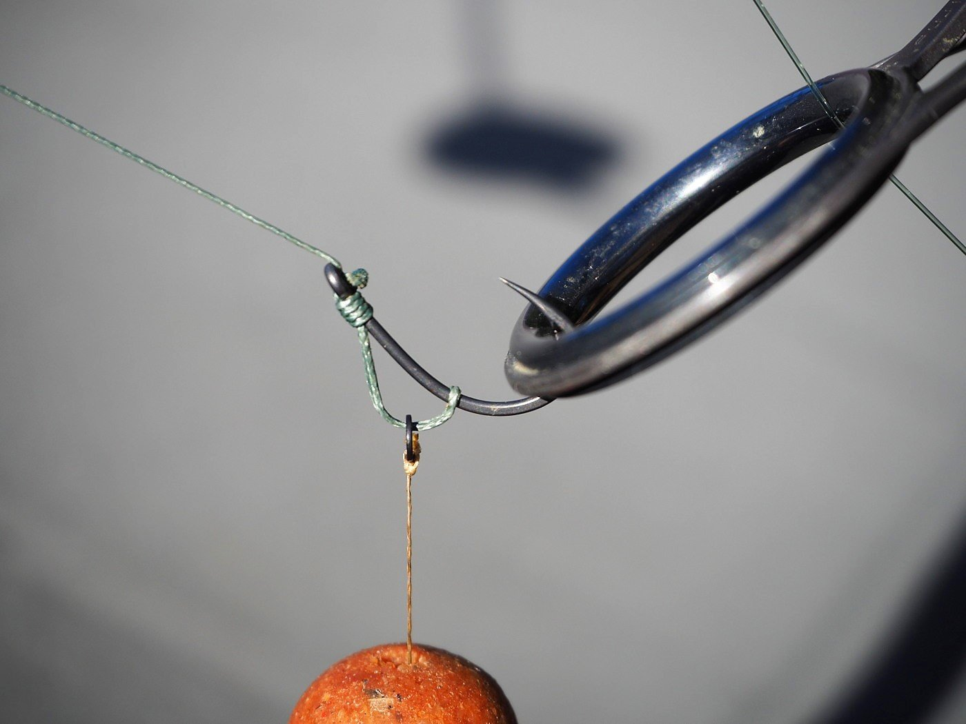 rig with carp and cat hooklink
