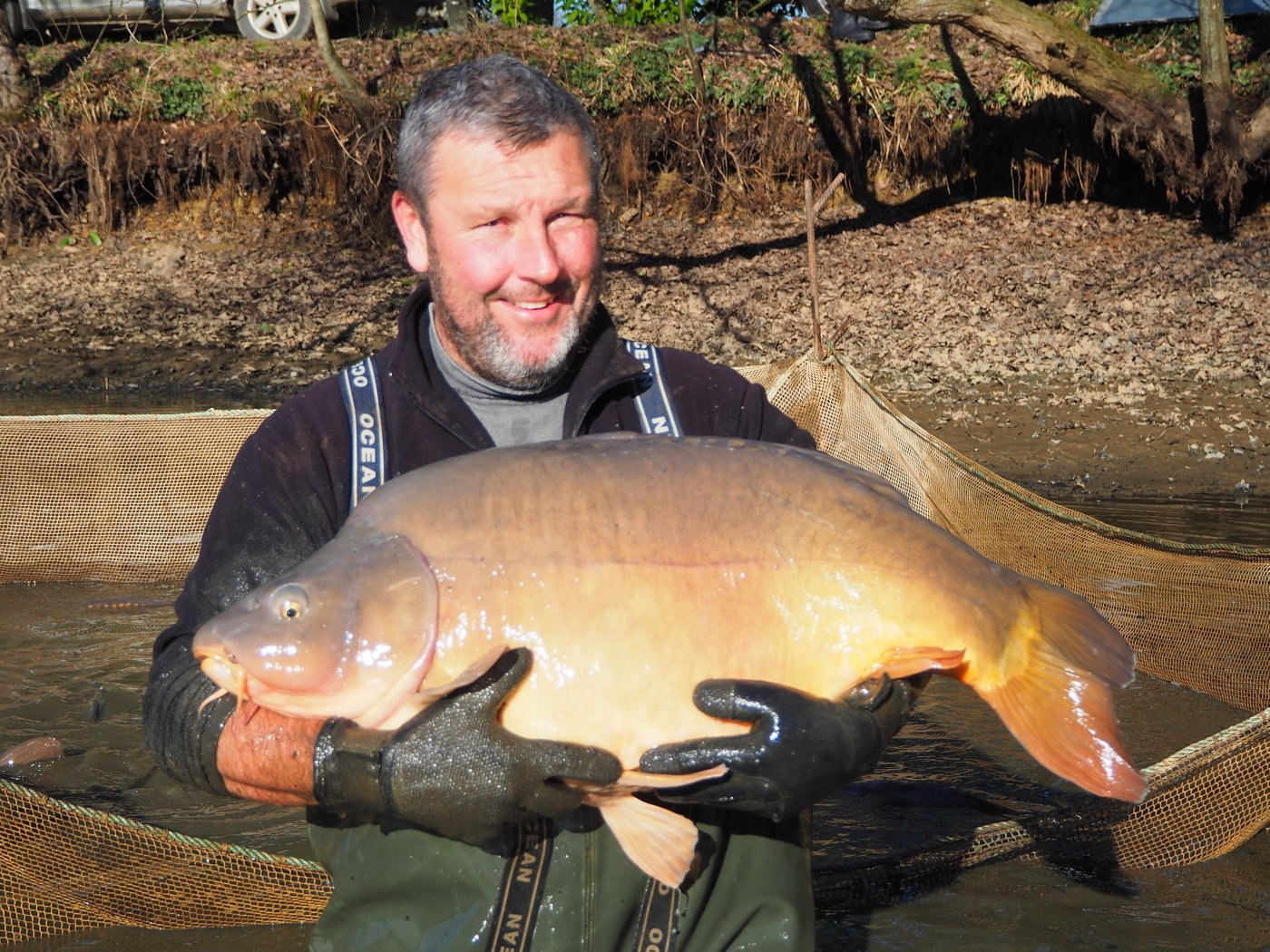 single scale mirror carp during the netting