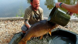 how to keep a carp cool when it is on the bank
